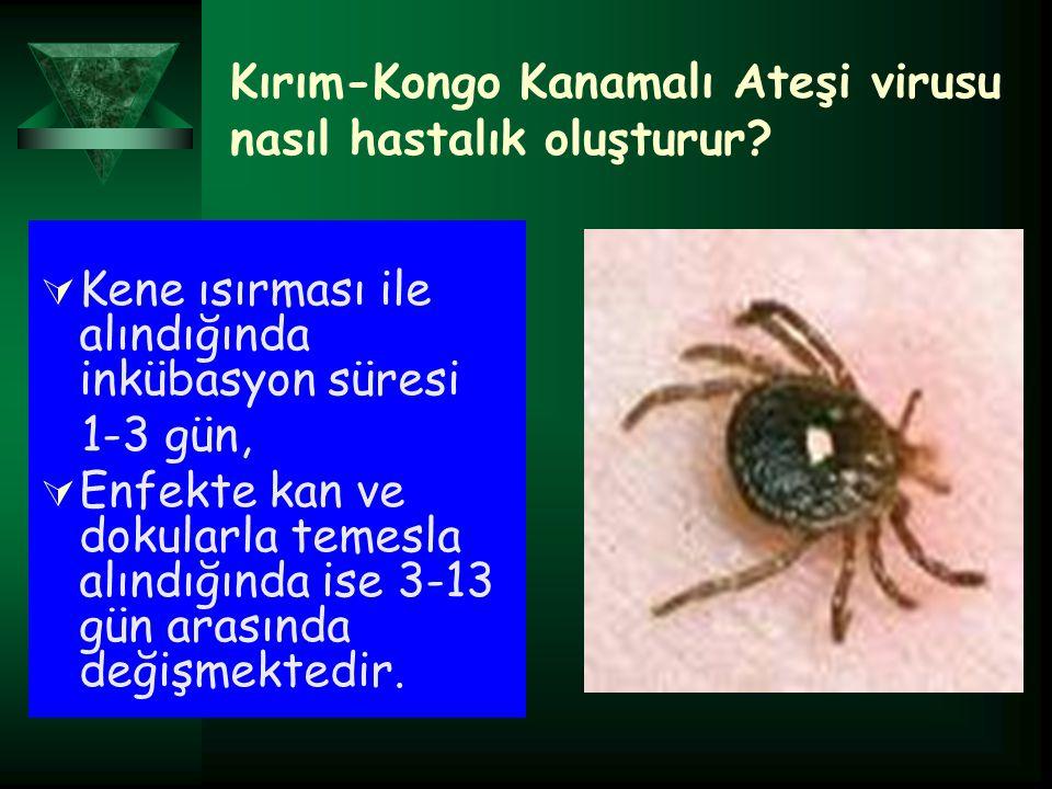 Kırım-Kongo Kanamalı Ateşi virusu nasıl hastalık oluşturur.