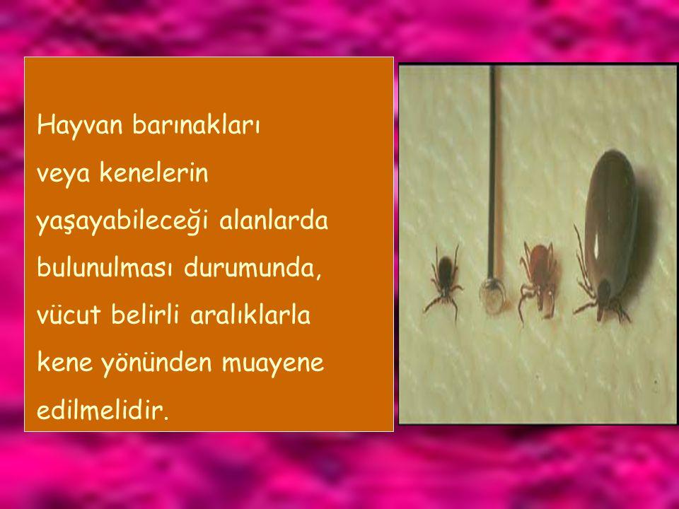 Hayvan barınakları veya kenelerin yaşayabileceği alanlarda bulunulması durumunda, vücut belirli aralıklarla kene yönünden muayene edilmelidir.