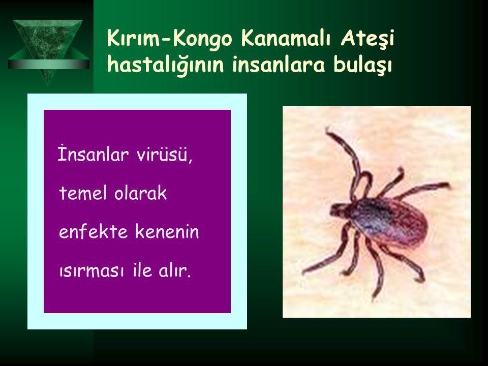 Kırım-Kongo Kanamalı Ateşi hastalığının insanlara bulaşı İnsanlar virüsü, temel olarak enfekte kenenin ısırması ile alır.