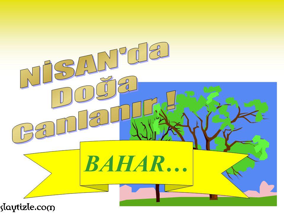 BAHAR…