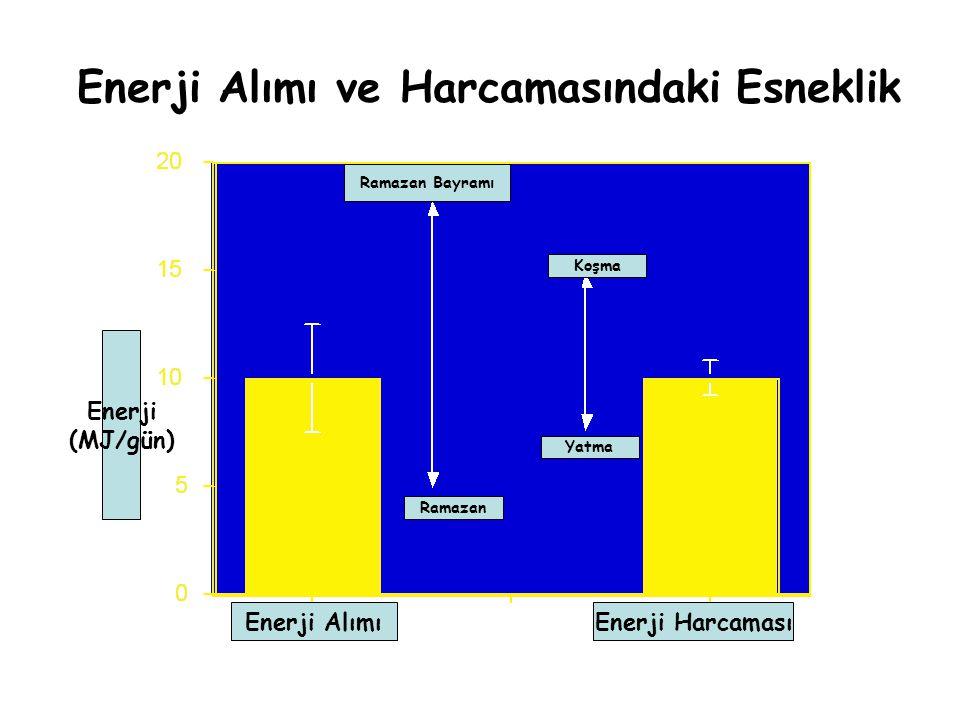 Enerji Alımı ve Harcamasındaki Esneklik Enerji HarcamasıEnerji Alımı Enerji (MJ/gün) Koşma Yatma Ramazan Bayramı Ramazan