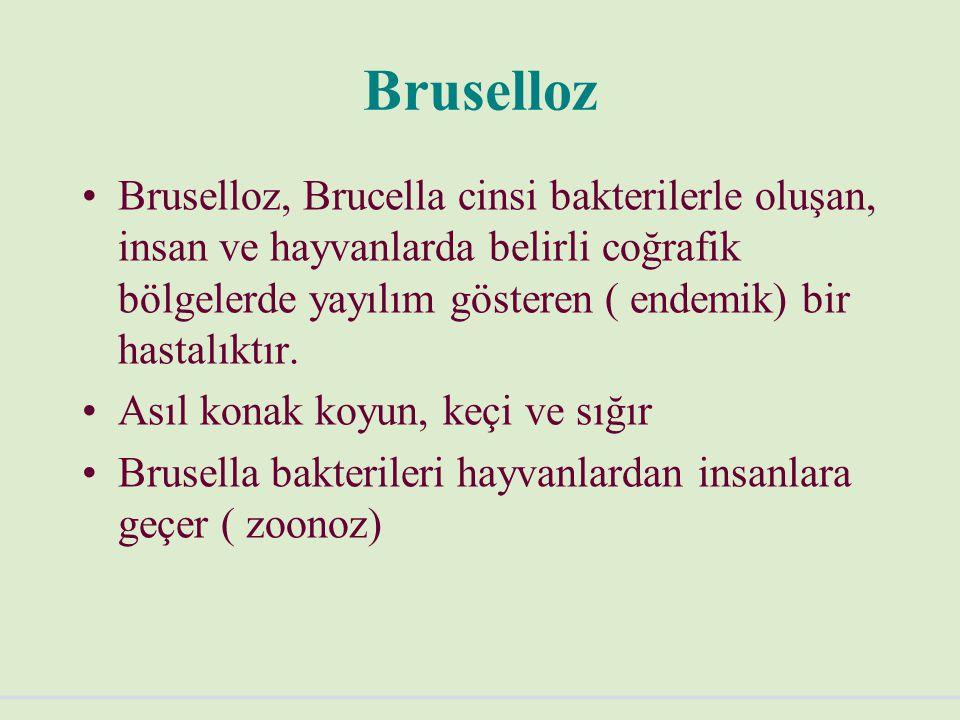Bruselloz Brucella melitensis Brucella abortus Brucella suis Brucella melitensis ve abortus arasında % 90'dan fazla antijenik uyum vardır
