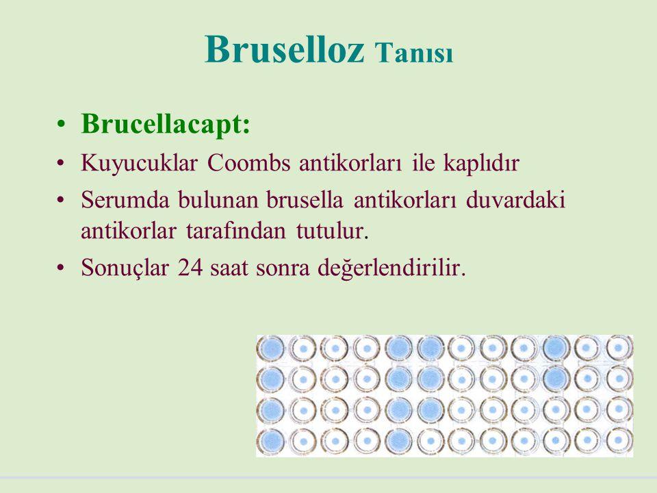 Bruselloz Tanısı Brucellacapt: Kuyucuklar Coombs antikorları ile kaplıdır Serumda bulunan brusella antikorları duvardaki antikorlar tarafından tutulur.