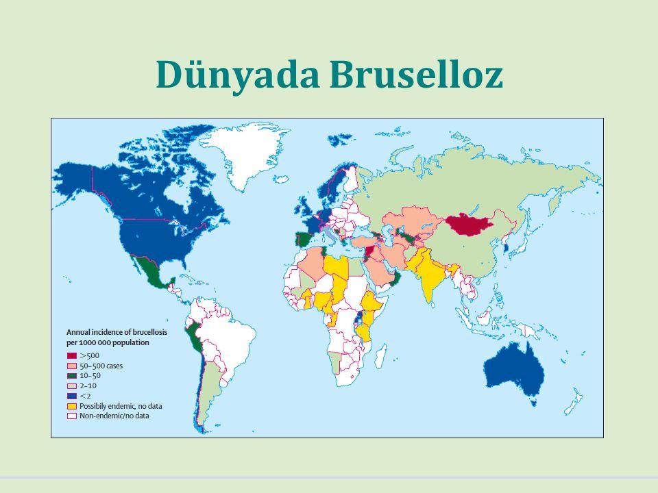 Türkiye'de Bruselloz