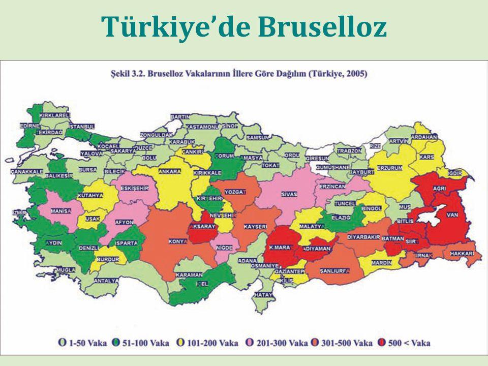 Türkiye'de bruselloz olgularının bölgelere göre dağılımı-2004
