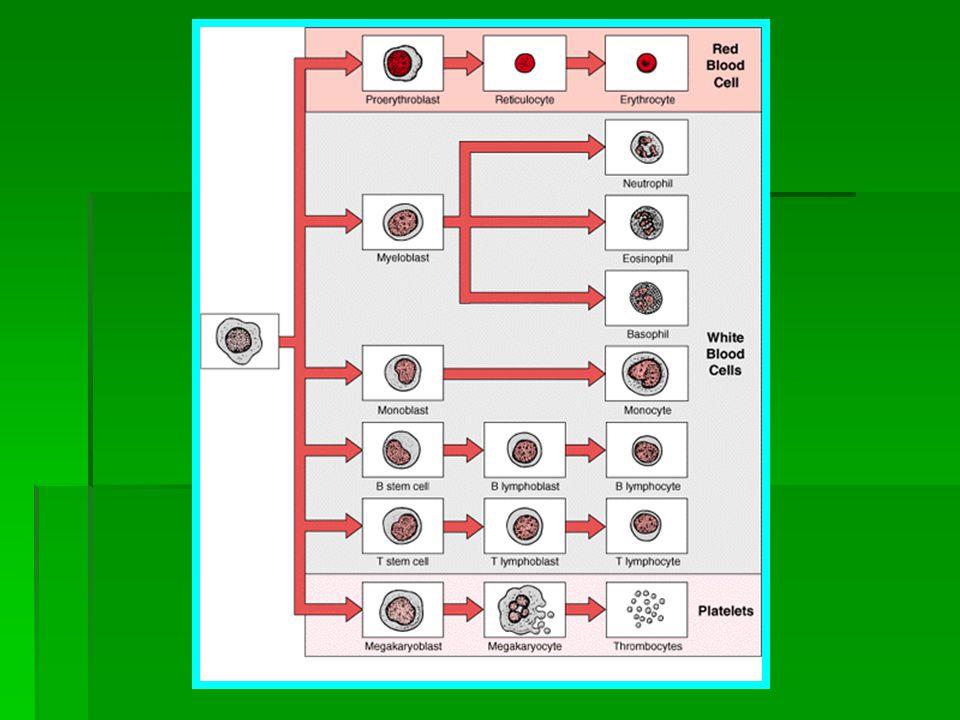 Kaynaklar: http://www.myholistichealthshop.com/files/Copy_of_catalog12.dochttp://www.myholistichealthshop.com/files/Copy_of_catalog12.doc http://www.alternative-cancer.net/77_alternatives.htm Hücre elektrik yükleri 50 mV düzeyine düşen biri sürekli yorgunluk hisseder ve daha sık hasta olur.