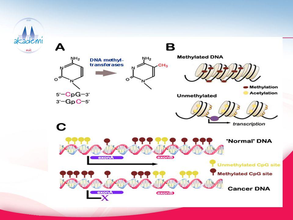 MDS de Genlerin Hipermetilasyon Durumu p15 INK4A (~65%) – hücre siklus kontrolü DAP kinaz (~47%) – Apoptozis Frajil histidin triad (FHIT) geni SOCS1 – sitokin regülasyonu E-cadherin – adezyon Alfa catenin (del 5q)