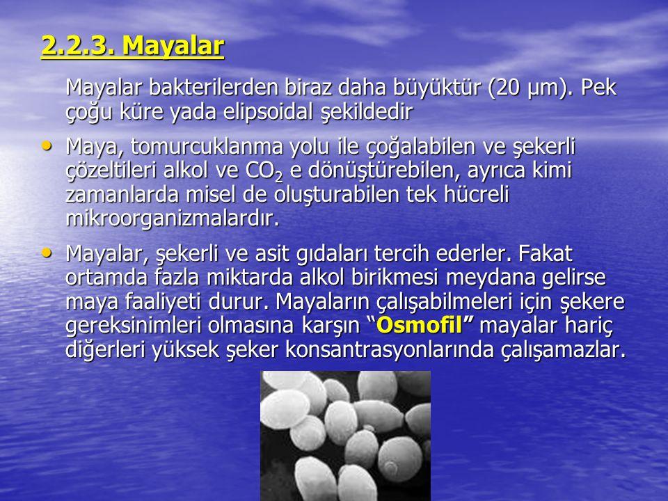 2.2.3. Mayalar Mayalar bakterilerden biraz daha büyüktür (20 μm). Pek çoğu küre yada elipsoidal şekildedir Maya, tomurcuklanma yolu ile çoğalabilen ve
