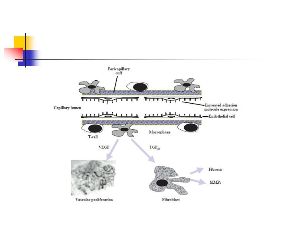 Diosmin İnflamatuvar reaksiyonları inhibe eder Lökosit-endotel etkileşimini azaltarak vasküler geçirgenliği azaltır Bradikinin'in oluşturduğu kapiller permeabileteyi azaltır