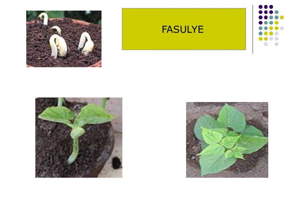 : Suni gübre kullanılacaksa gübrenin tamamı bir defada ve ekimden 2-3 hafta önce sürümle toprağa karıştırılmalıdır.