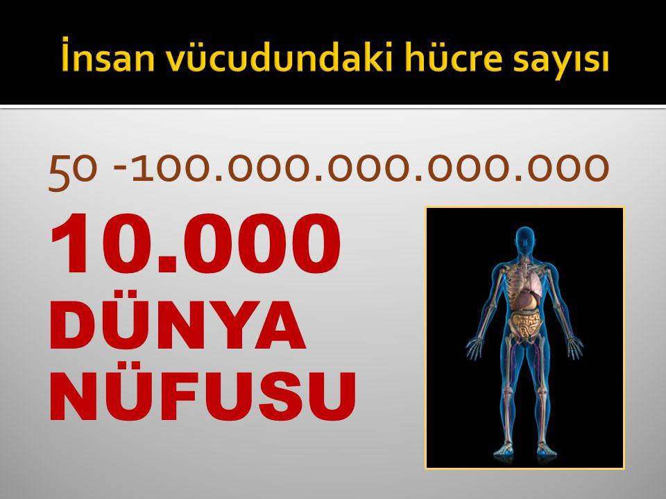 10.000 DÜNYA NÜFUSU
