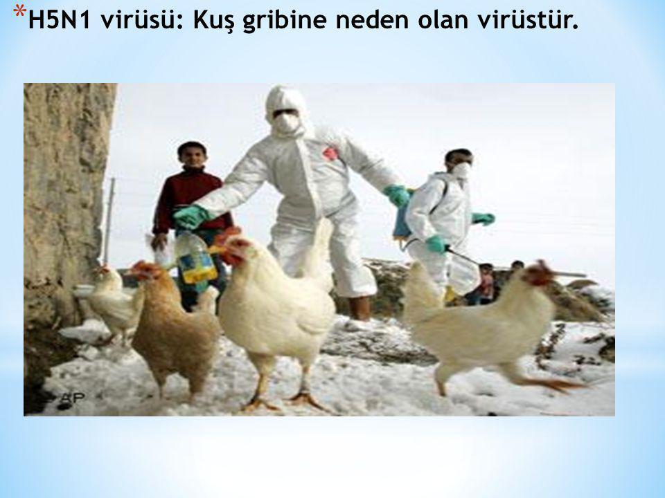 * H5N1 virüsü: Kuş gribine neden olan virüstür.