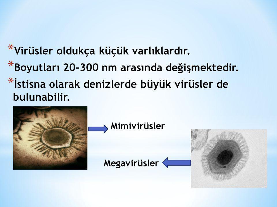 * Virüsler oldukça küçük varlıklardır. * Boyutları 20-300 nm arasında değişmektedir. * İstisna olarak denizlerde büyük virüsler de bulunabilir. Mimivi