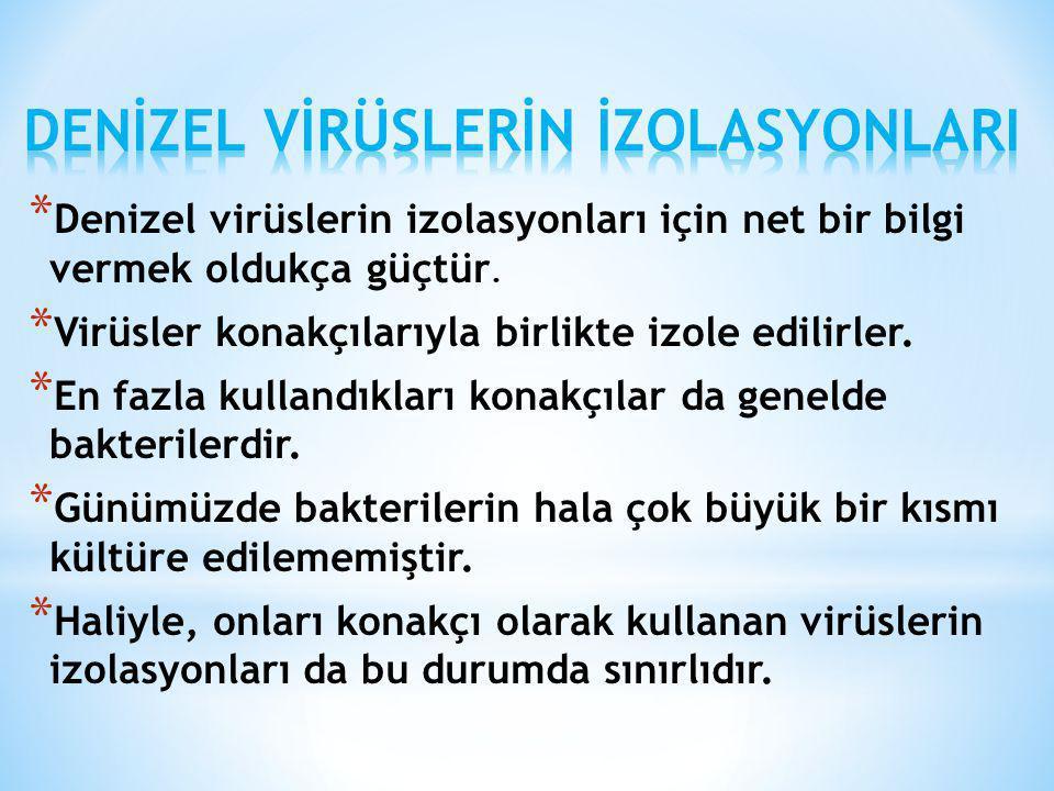 * Denizel virüslerin izolasyonları için net bir bilgi vermek oldukça güçtür. * Virüsler konakçılarıyla birlikte izole edilirler. * En fazla kullandıkl