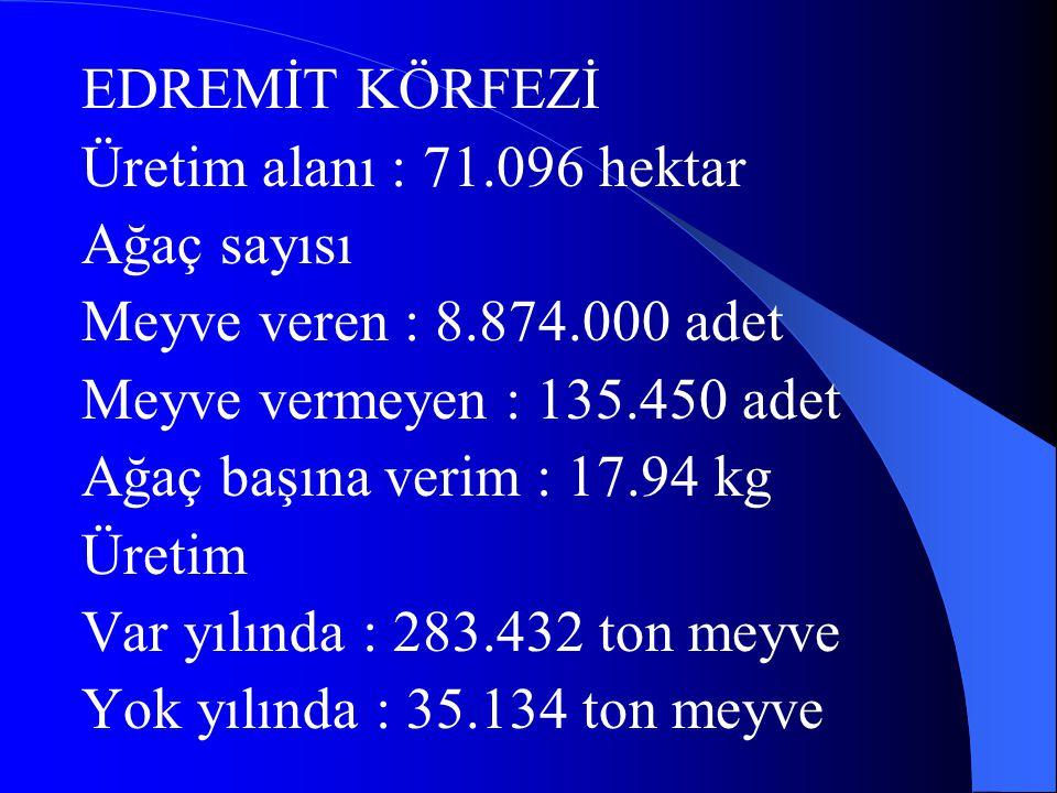 EDREMİT KÖRFEZİ Üretim alanı : 71.096 hektar Ağaç sayısı Meyve veren : 8.874.000 adet Meyve vermeyen : 135.450 adet Ağaç başına verim : 17.94 kg Üreti