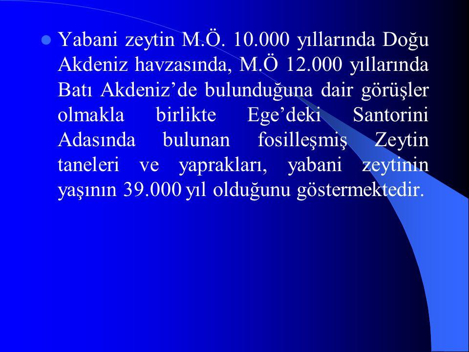 Yabani zeytin M.Ö. 10.000 yıllarında Doğu Akdeniz havzasında, M.Ö 12.000 yıllarında Batı Akdeniz'de bulunduğuna dair görüşler olmakla birlikte Ege'dek