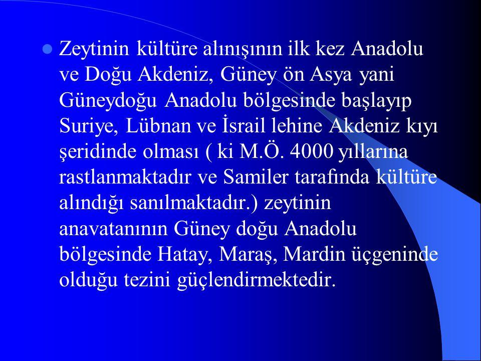 Zeytinin kültüre alınışının ilk kez Anadolu ve Doğu Akdeniz, Güney ön Asya yani Güneydoğu Anadolu bölgesinde başlayıp Suriye, Lübnan ve İsrail lehine