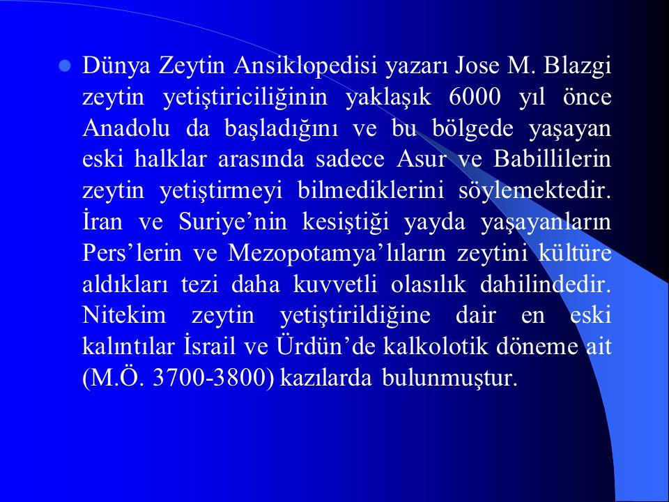 Dünya Zeytin Ansiklopedisi yazarı Jose M. Blazgi zeytin yetiştiriciliğinin yaklaşık 6000 yıl önce Anadolu da başladığını ve bu bölgede yaşayan eski ha