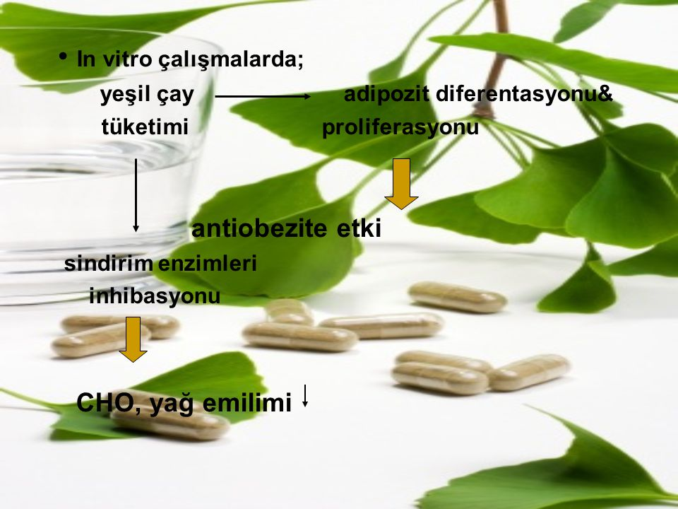 In vitro çalışmalarda; yeşil çay adipozit diferentasyonu& tüketimi proliferasyonu antiobezite etki sindirim enzimleri inhibasyonu CHO, yağ emilimi
