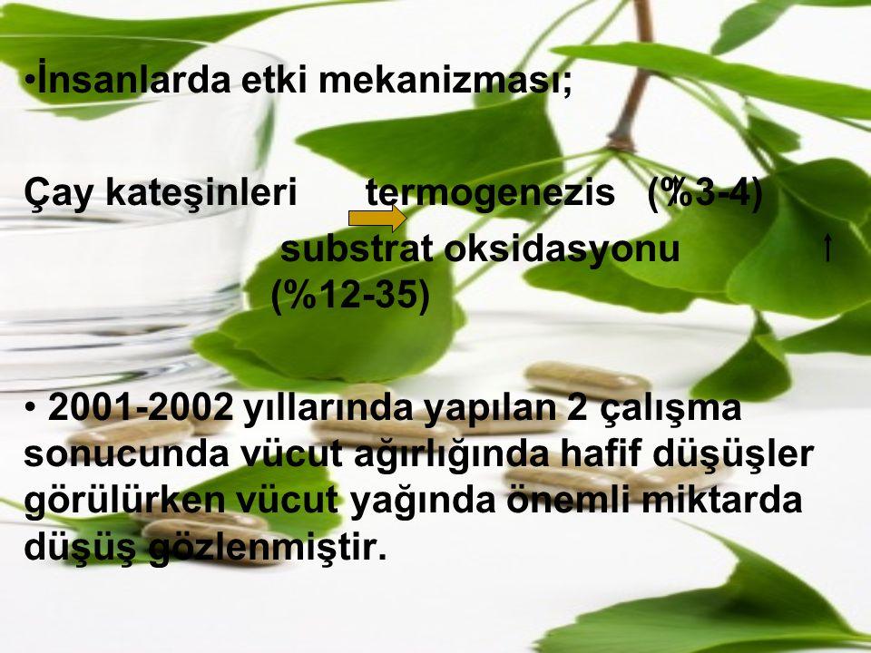 İnsanlarda etki mekanizması; Çay kateşinleri termogenezis (%3-4) substrat oksidasyonu (%12-35) 2001-2002 yıllarında yapılan 2 çalışma sonucunda vücut