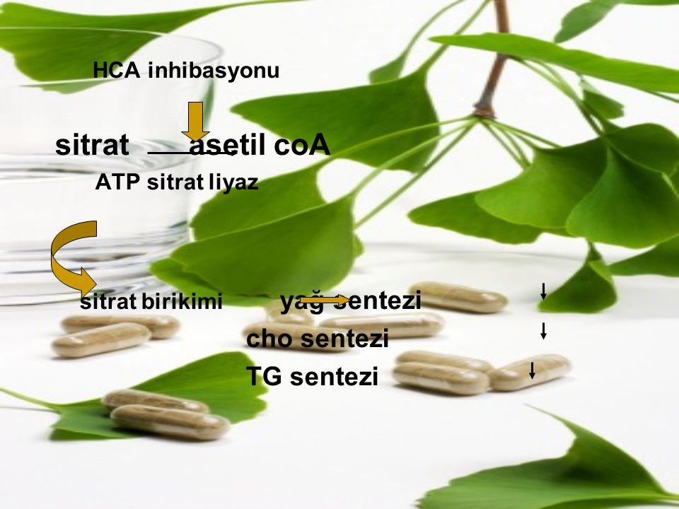 HCA inhibasyonu sitrat asetil coA ATP sitrat liyaz sitrat birikimi yağ sentezi cho sentezi TG sentezi