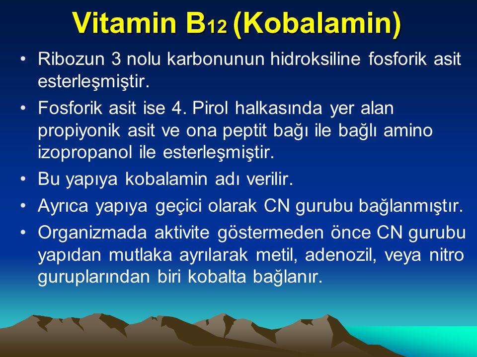 Vitamin B 12 (Kobalamin) Ribozun 3 nolu karbonunun hidroksiline fosforik asit esterleşmiştir.