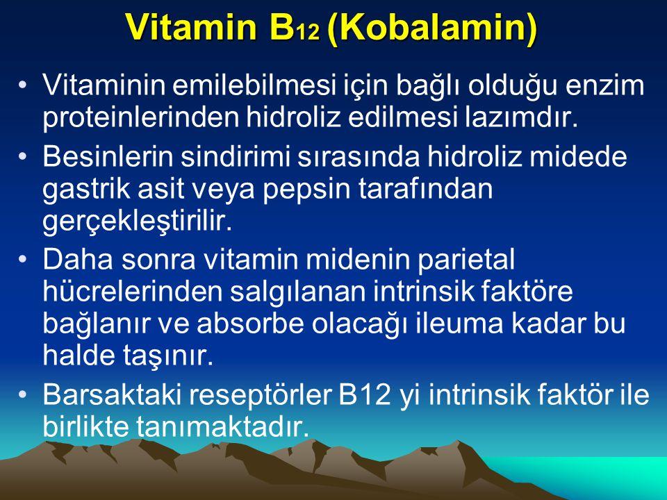 Vitamin B 12 (Kobalamin) Vitaminin emilebilmesi için bağlı olduğu enzim proteinlerinden hidroliz edilmesi lazımdır.
