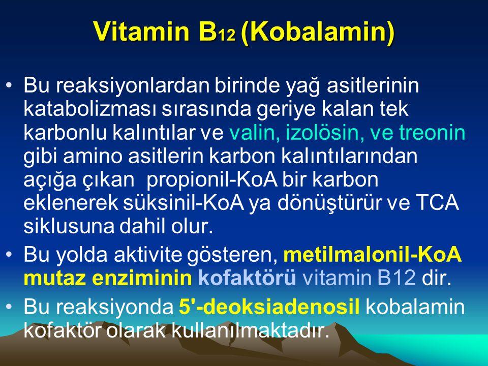 Vitamin B 12 (Kobalamin) Bu reaksiyonlardan birinde yağ asitlerinin katabolizması sırasında geriye kalan tek karbonlu kalıntılar ve valin, izolösin, ve treonin gibi amino asitlerin karbon kalıntılarından açığa çıkan propionil-KoA bir karbon eklenerek süksinil-KoA ya dönüştürür ve TCA siklusuna dahil olur.