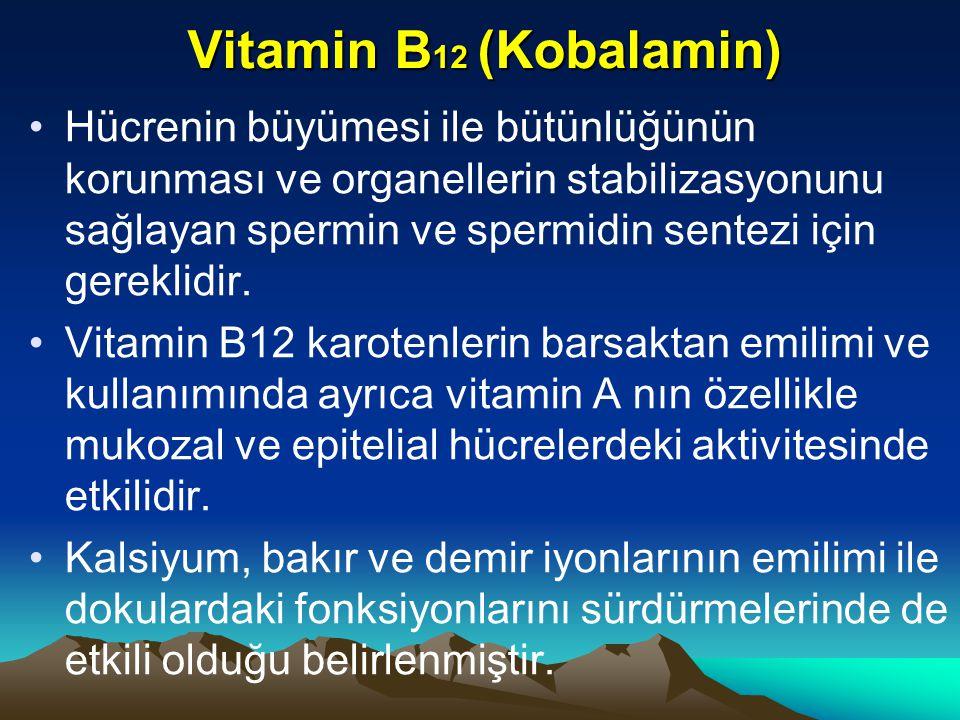 Vitamin B 12 (Kobalamin) Hücrenin büyümesi ile bütünlüğünün korunması ve organellerin stabilizasyonunu sağlayan spermin ve spermidin sentezi için gereklidir.