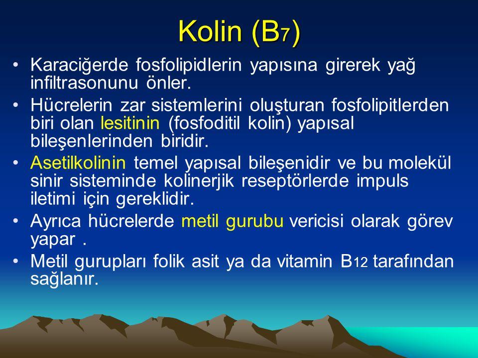 Kolin (B 7 ) Karaciğerde fosfolipidlerin yapısına girerek yağ infiltrasonunu önler.