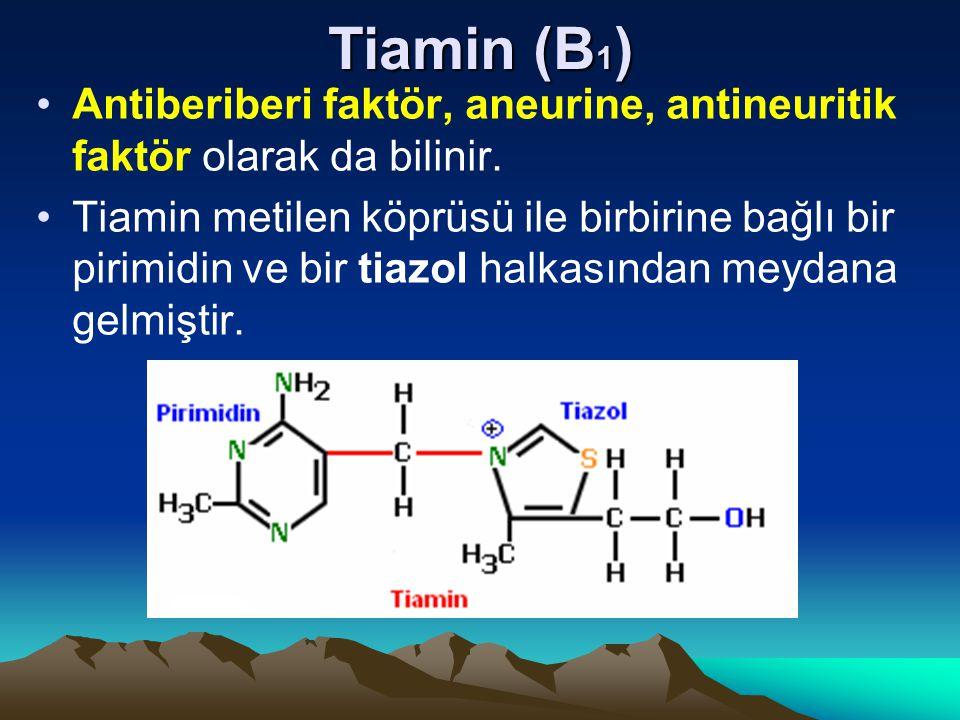 Tiamin (B 1 ) Antiberiberi faktör, aneurine, antineuritik faktör olarak da bilinir.