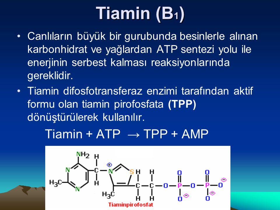 Tiamin (B 1 ) Canlıların büyük bir gurubunda besinlerle alınan karbonhidrat ve yağlardan ATP sentezi yolu ile enerjinin serbest kalması reaksiyonlarında gereklidir.