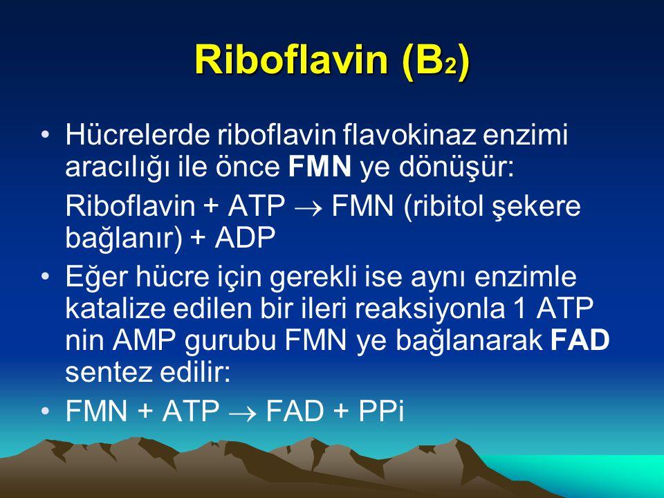 Riboflavin (B 2 ) Hücrelerde riboflavin flavokinaz enzimi aracılığı ile önce FMN ye dönüşür: Riboflavin + ATP  FMN (ribitol şekere bağlanır) + ADP Eğer hücre için gerekli ise aynı enzimle katalize edilen bir ileri reaksiyonla 1 ATP nin AMP gurubu FMN ye bağlanarak FAD sentez edilir: FMN + ATP  FAD + PPi