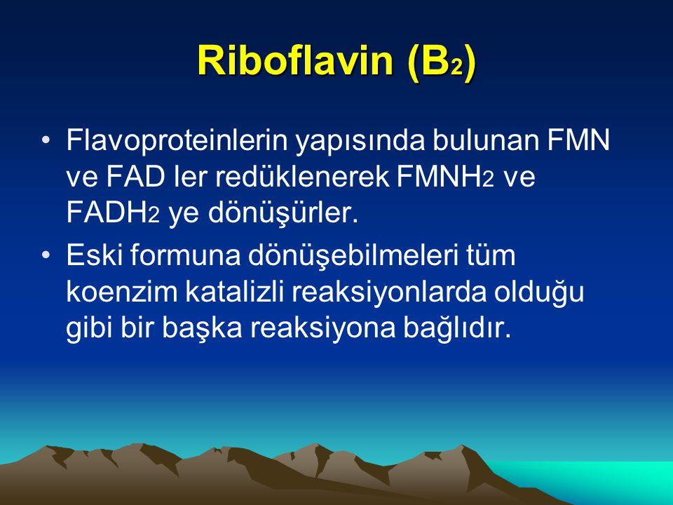 Riboflavin (B 2 ) Flavoproteinlerin yapısında bulunan FMN ve FAD ler redüklenerek FMNH 2 ve FADH 2 ye dönüşürler.