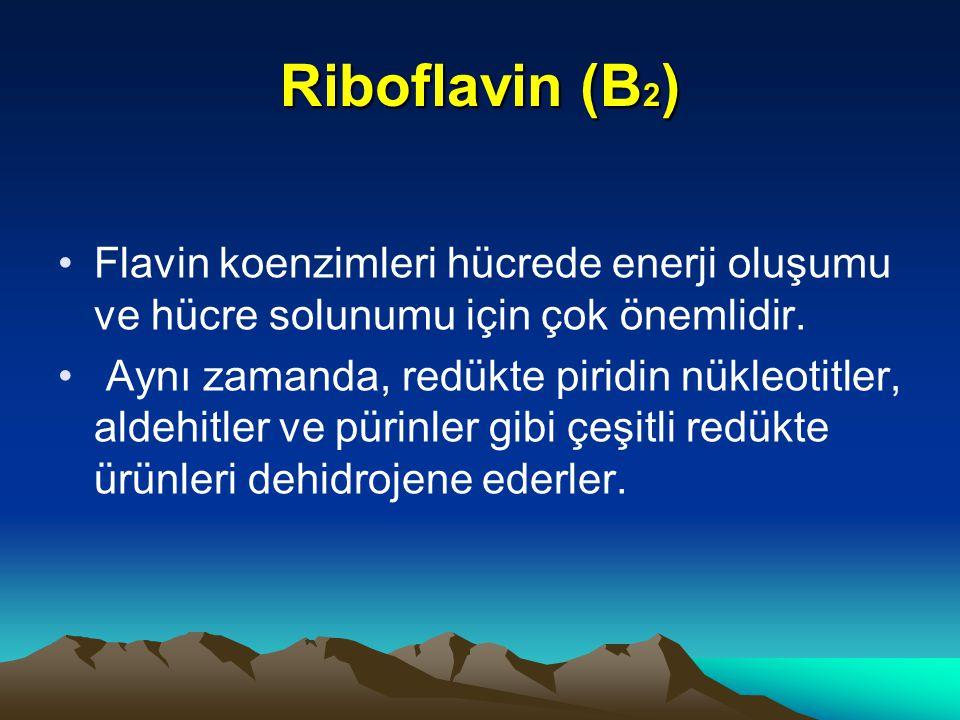 Riboflavin (B 2 ) Flavin koenzimleri hücrede enerji oluşumu ve hücre solunumu için çok önemlidir.