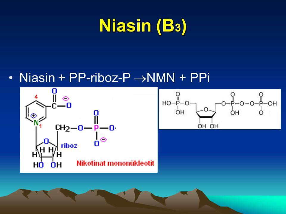 Niasin (B 3 ) Niasin + PP-riboz-P  NMN + PPi