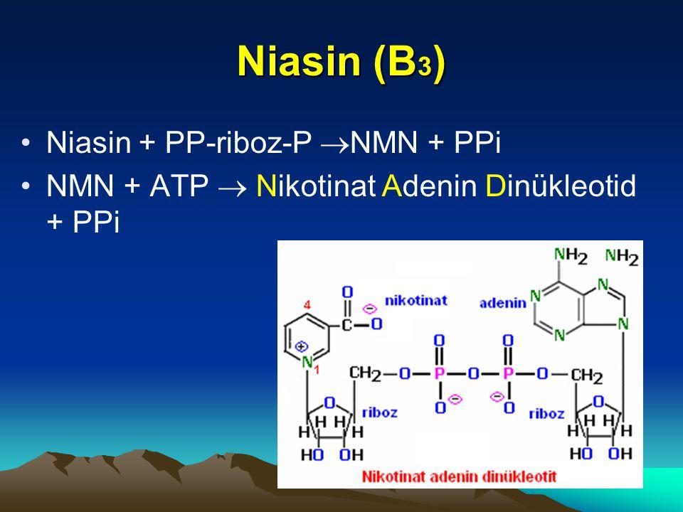 Niasin (B 3 ) Niasin + PP-riboz-P  NMN + PPi NMN + ATP  Nikotinat Adenin Dinükleotid + PPi