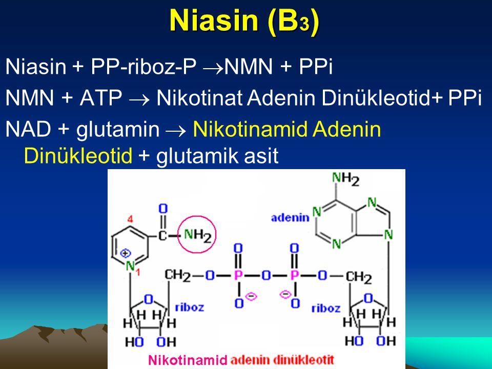 Niasin (B 3 ) Niasin + PP-riboz-P  NMN + PPi NMN + ATP  Nikotinat Adenin Dinükleotid+ PPi NAD + glutamin  Nikotinamid Adenin Dinükleotid + glutamik asit