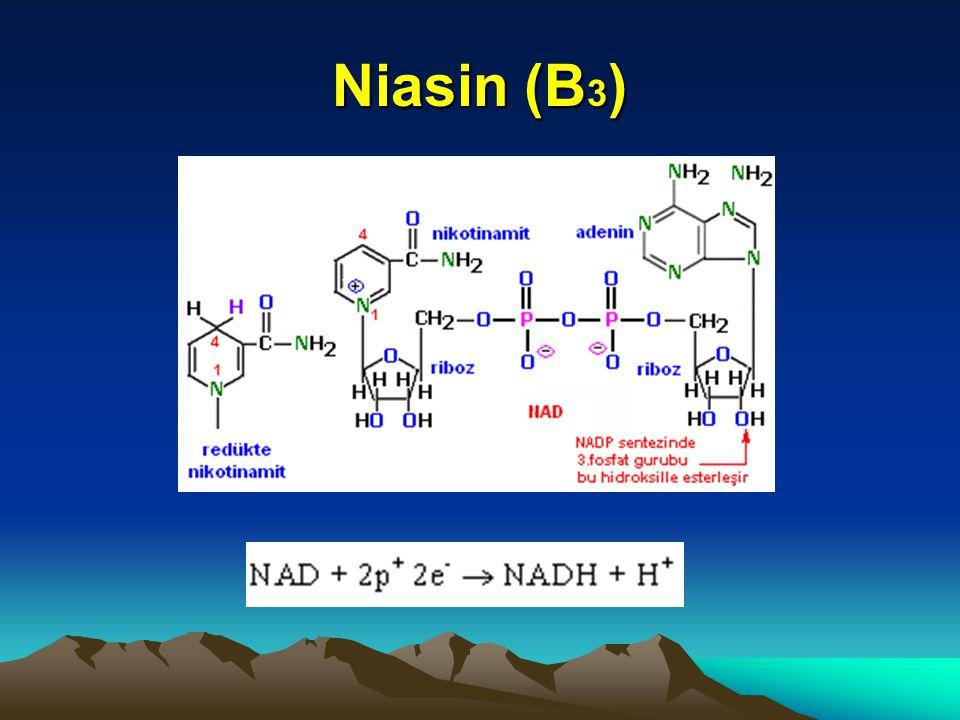 Niasin (B 3 )