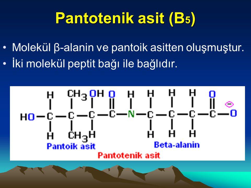 Pantotenik asit (B 5 ) Molekül β-alanin ve pantoik asitten oluşmuştur.