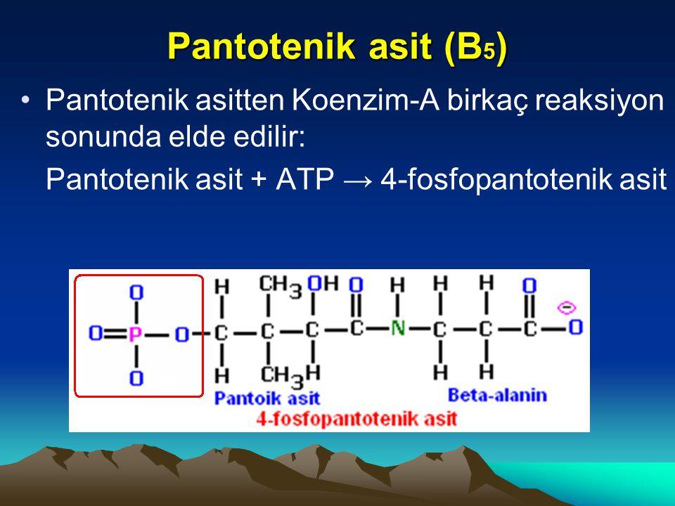 Pantotenik asit (B 5 ) Pantotenik asitten Koenzim-A birkaç reaksiyon sonunda elde edilir: Pantotenik asit + ATP → 4-fosfopantotenik asit