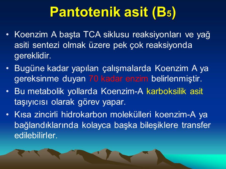 Pantotenik asit (B 5 ) Koenzim A başta TCA siklusu reaksiyonları ve yağ asiti sentezi olmak üzere pek çok reaksiyonda gereklidir.