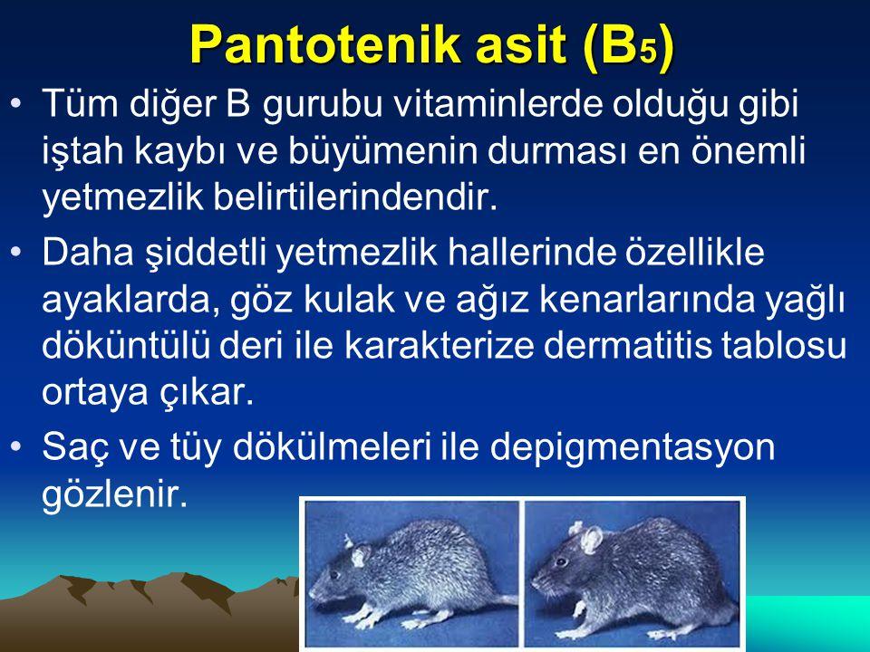 Pantotenik asit (B 5 ) Tüm diğer B gurubu vitaminlerde olduğu gibi iştah kaybı ve büyümenin durması en önemli yetmezlik belirtilerindendir.
