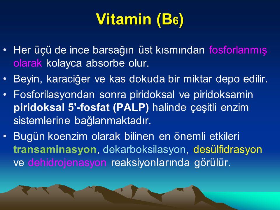 Vitamin (B 6 ) Her üçü de ince barsağın üst kısmından fosforlanmış olarak kolayca absorbe olur.