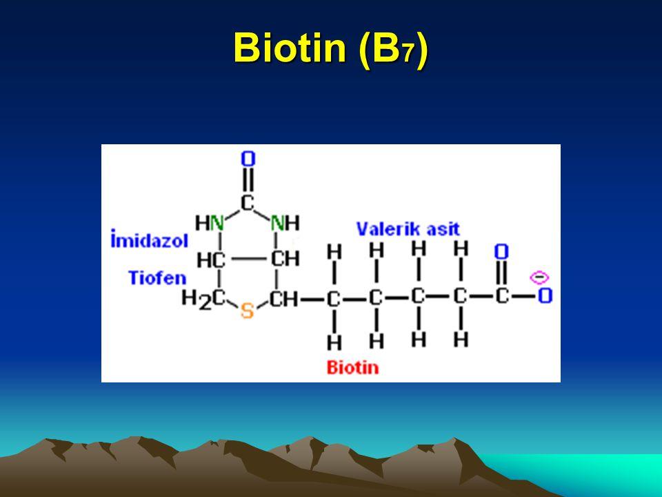 Biotin (B 7 )