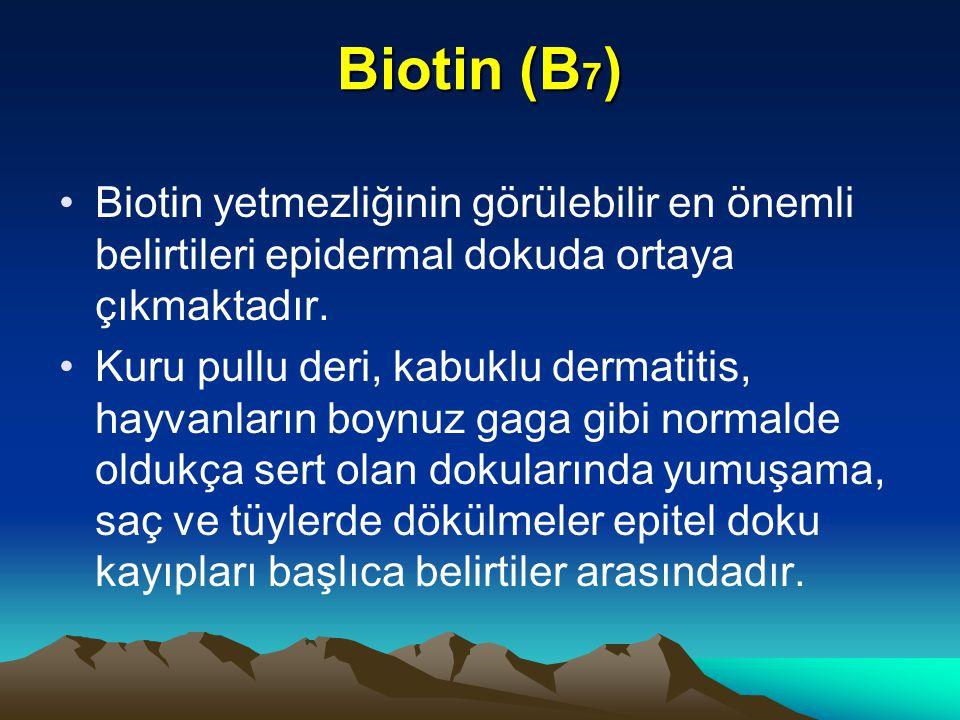 Biotin (B 7 ) Biotin yetmezliğinin görülebilir en önemli belirtileri epidermal dokuda ortaya çıkmaktadır.