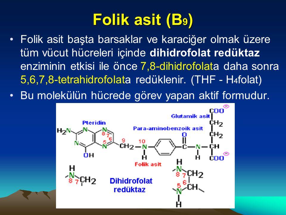 Folik asit (B 9 ) Folik asit başta barsaklar ve karaciğer olmak üzere tüm vücut hücreleri içinde dihidrofolat redüktaz enziminin etkisi ile önce 7,8-dihidrofolata daha sonra 5,6,7,8-tetrahidrofolata redüklenir.