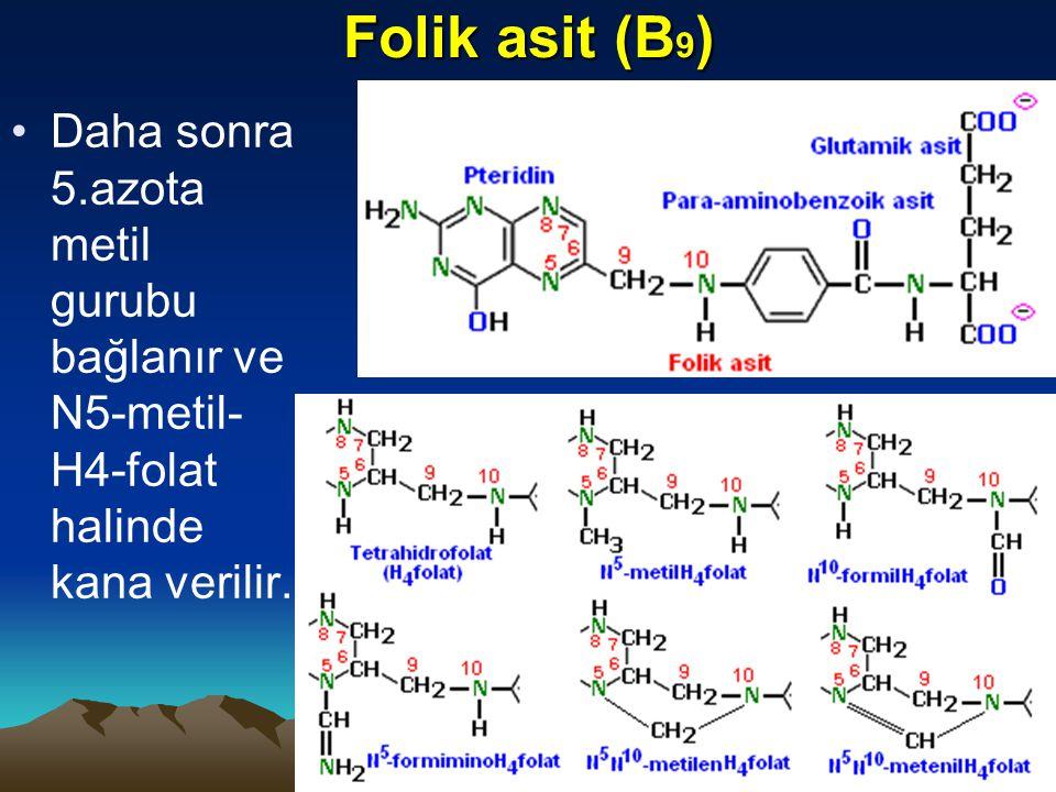 Folik asit (B 9 ) Daha sonra 5.azota metil gurubu bağlanır ve N5-metil- H4-folat halinde kana verilir.