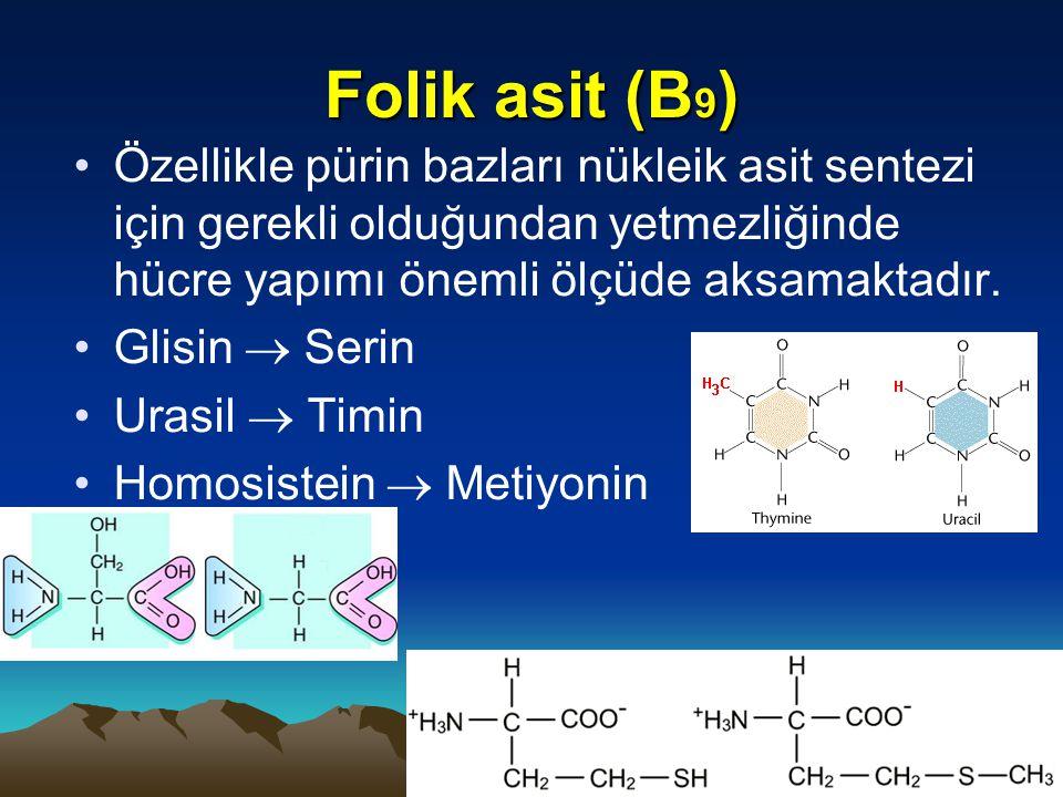 Folik asit (B 9 ) Özellikle pürin bazları nükleik asit sentezi için gerekli olduğundan yetmezliğinde hücre yapımı önemli ölçüde aksamaktadır.