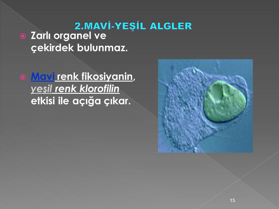 14 Şekillerine göre bakteriler Yuvarlak bakteriler Çubuk Bakteriler Virgül şekilli bakteriler Spiral Şekilli bakteriler
